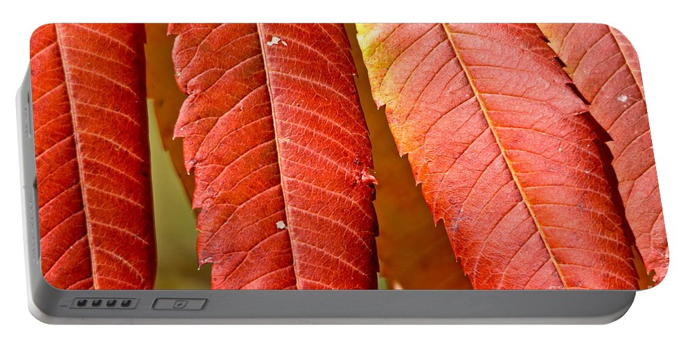 Portable Battery Charger featuring the photograph Sumac Leaves by Cheryl Baxter