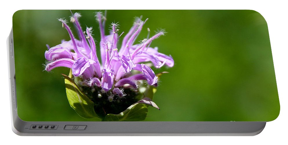 Flower Portable Battery Charger featuring the photograph Summer Balm by Susan Herber