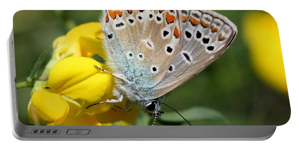 European Common Blue Butterfly Portable Battery Charger featuring the photograph Summer Beauty by Doris Potter