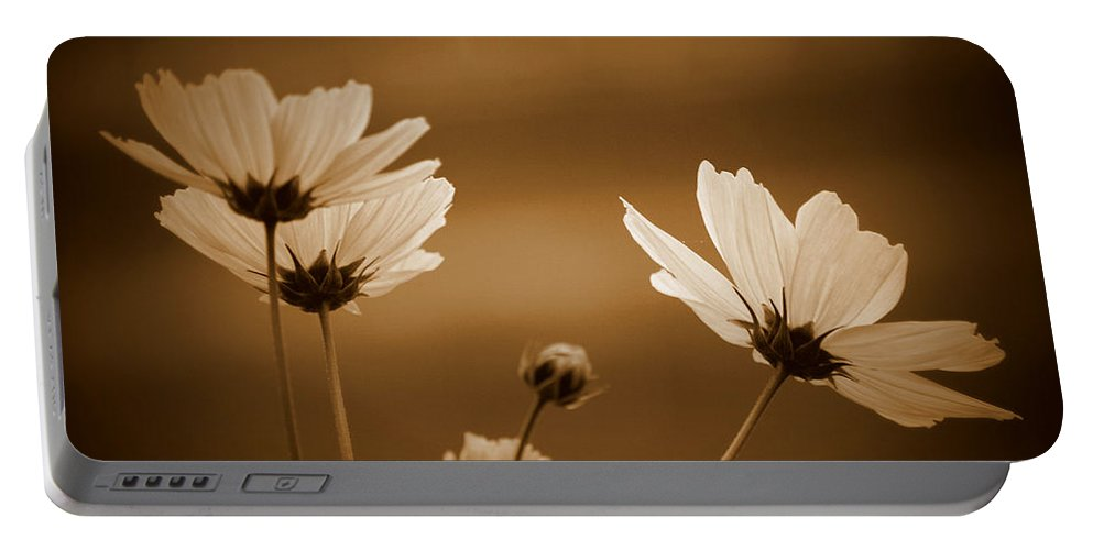 Sepia Portable Battery Charger featuring the photograph Summer Evening Cosmos by Kathy Sampson