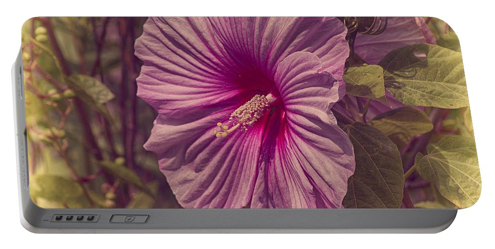 Flower Portable Battery Charger featuring the photograph Summer Reward by Joe Geraci