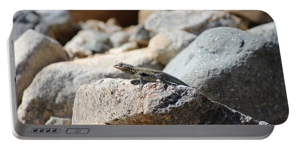 Reptile Portable Battery Charger featuring the photograph Sun Bathing by Tiffany Erdman