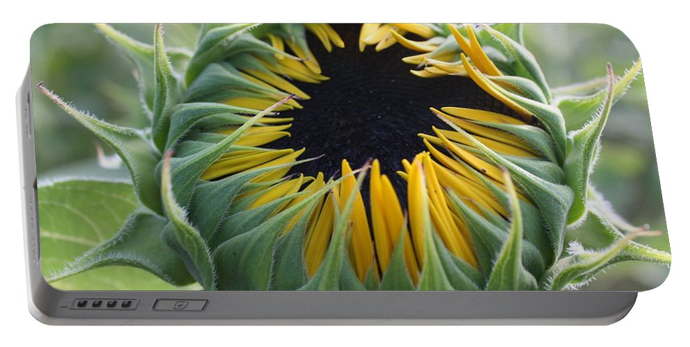 Sunflower Portable Battery Charger featuring the photograph Blooming Sunflower by Dora Sofia Caputo Photographic Design and Fine Art