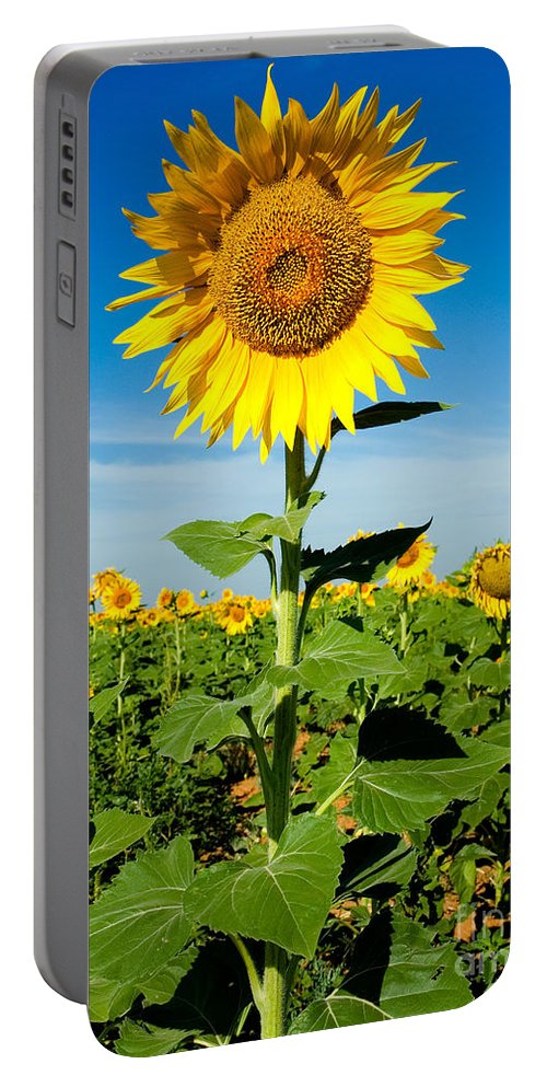 A Sunflower Photograph Portable Battery Charger featuring the photograph Sunflower by Mae Wertz