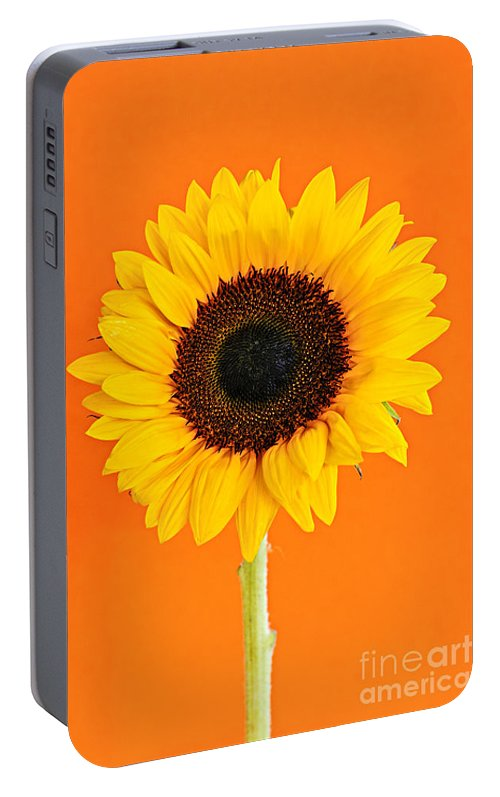 Sunflower Portable Battery Charger featuring the photograph Sunflower On Orange by Elena Elisseeva