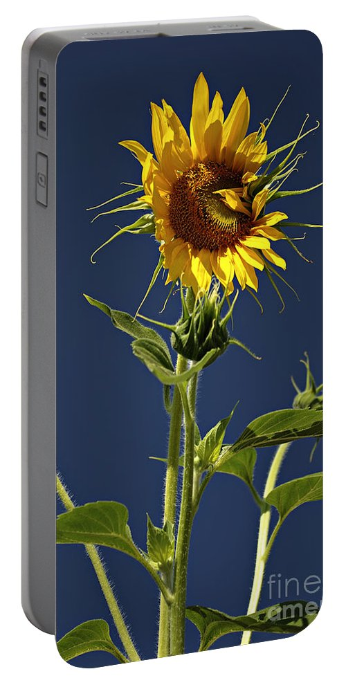 Background Portable Battery Charger featuring the photograph Sunflowers by Zoran Berdjan