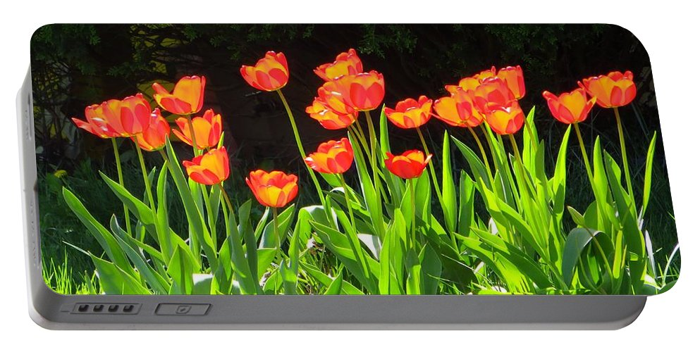 Tulip Garden Portable Battery Charger featuring the photograph Sunkissed Tulip Garden by Sonali Gangane