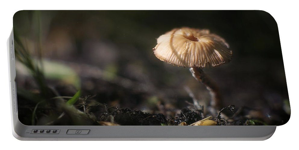 Mushroom Portable Battery Charger featuring the photograph Sunlit Mushroom by Scott Norris