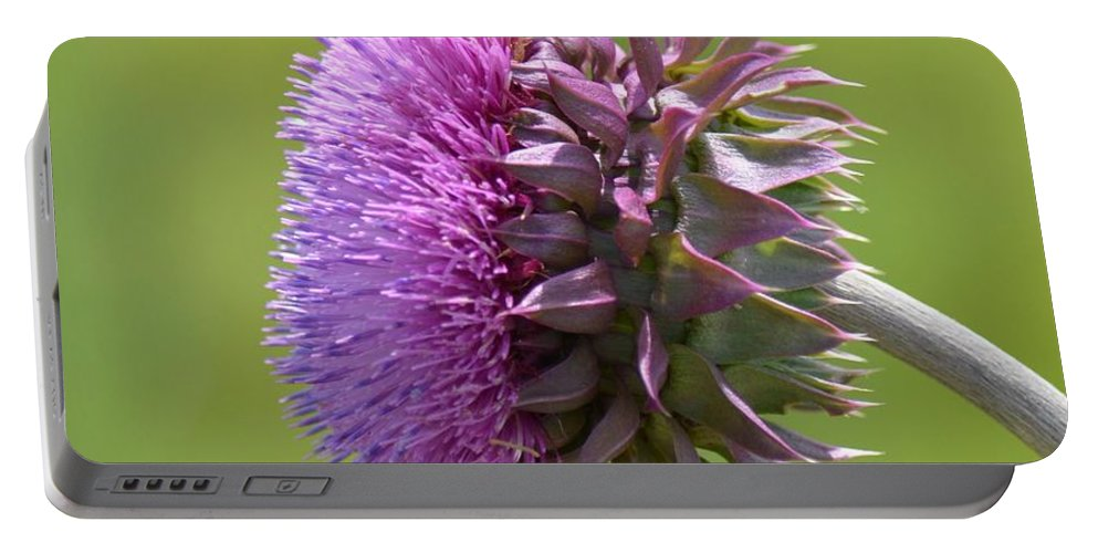 Sunlit Thistle Portable Battery Charger featuring the photograph Sunlit Thistle by Maria Urso