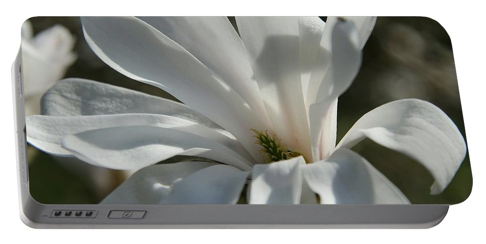 Magnolia Portable Battery Charger featuring the photograph Sunlit White Magnolia by Christiane Schulze Art And Photography
