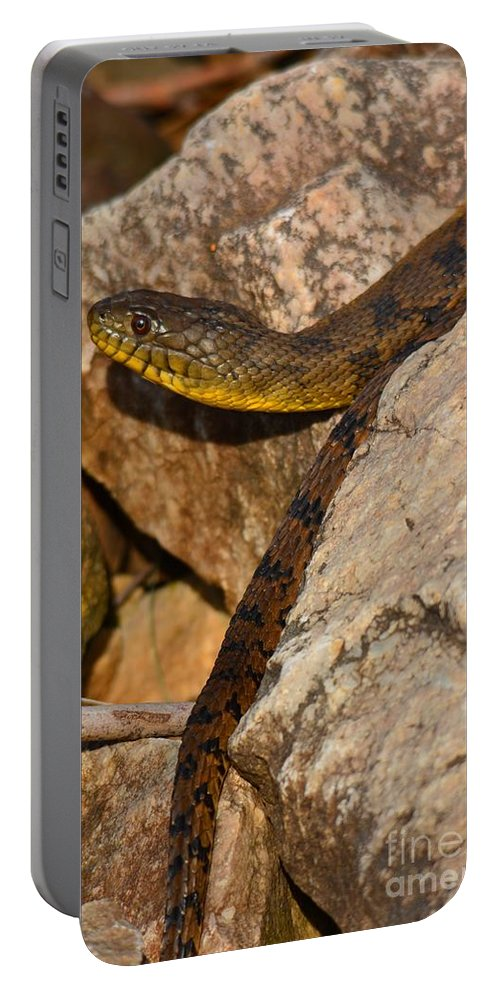 Snake Portable Battery Charger featuring the photograph Sunning Snake by Deanna Cagle