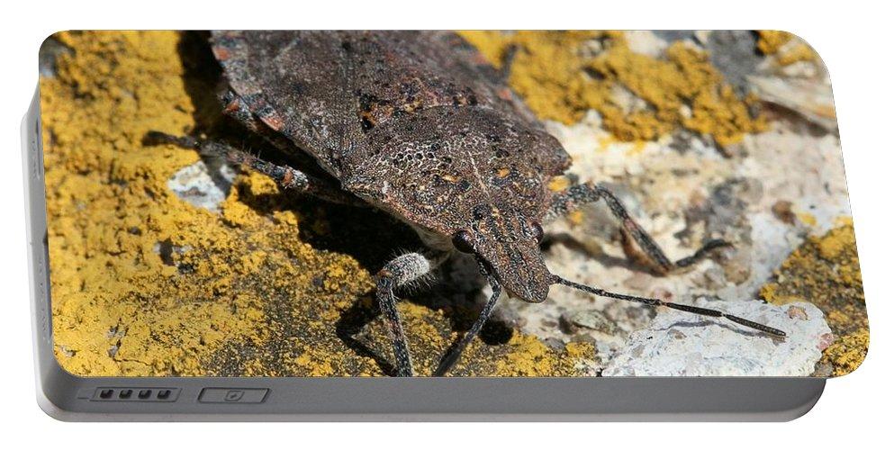 Stinkbug Portable Battery Charger featuring the photograph Sunning Stinkbug by Doris Potter