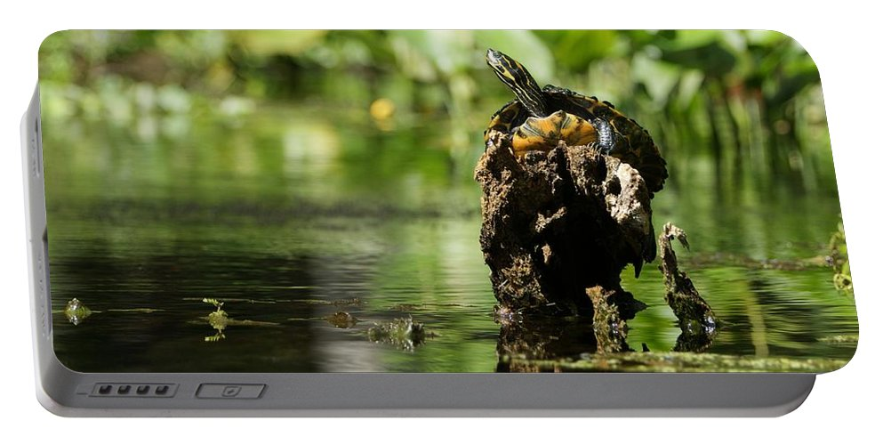 Wildlife Portable Battery Charger featuring the photograph Sunning Turtle by Brian Kamprath
