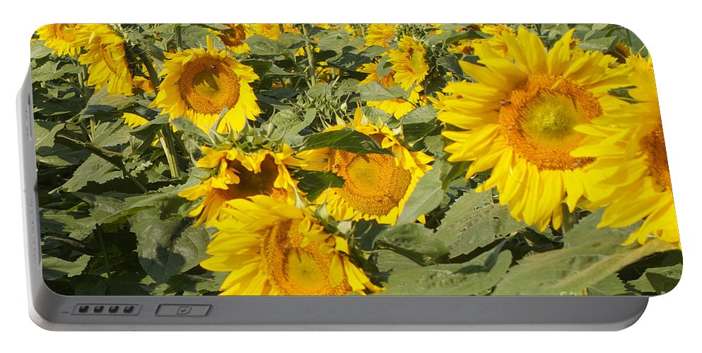 Yellow Portable Battery Charger featuring the photograph Sunning With Friends by William Norton