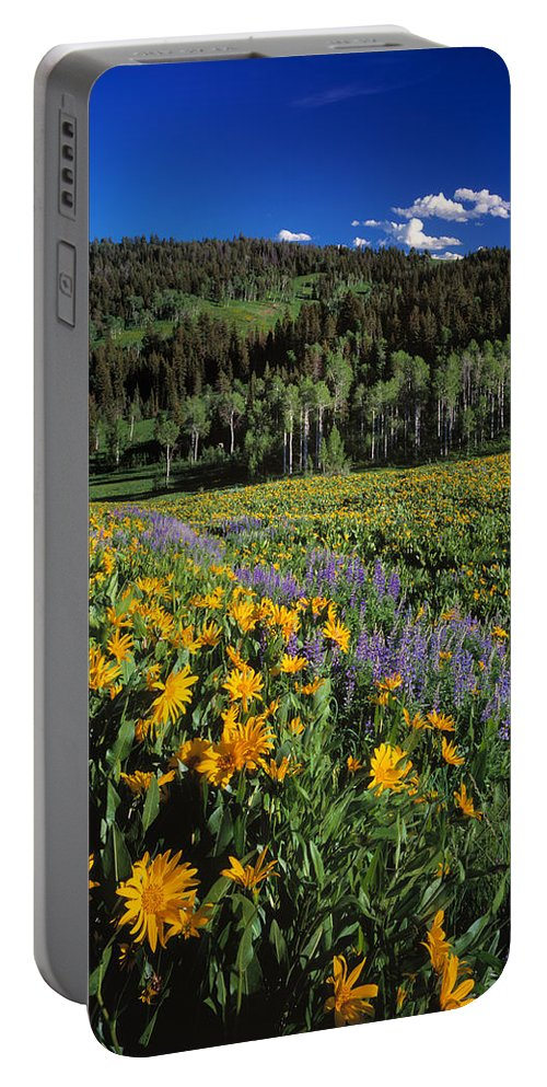 Spring Flowers Portable Battery Charger featuring the photograph Sunny Spring Day by Leland D Howard