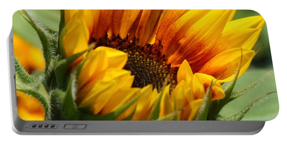 Flower Portable Battery Charger featuring the photograph Sunny Sunflower by Jane Luxton