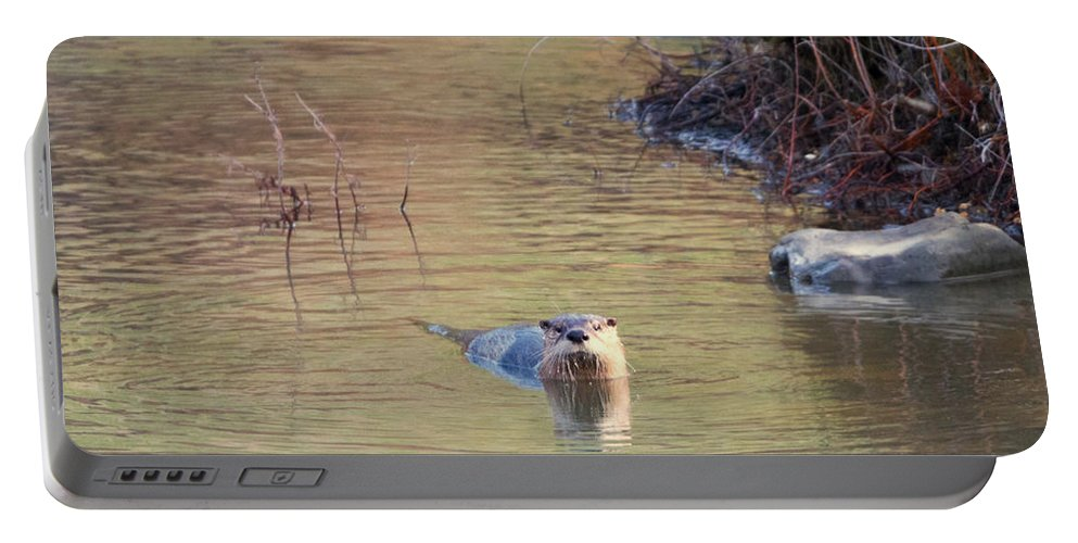 North American River Otter Portable Battery Charger featuring the photograph Sunrise Otter by Mike Dawson