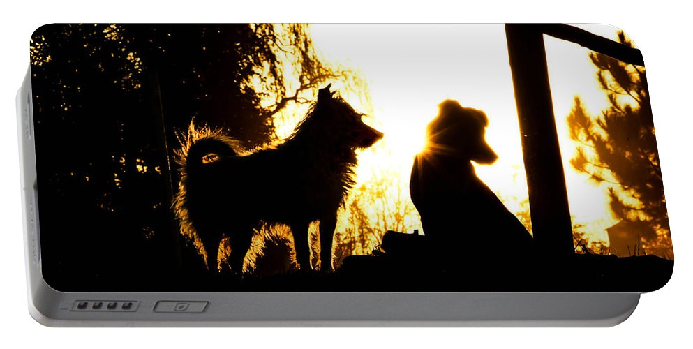 Canine Portable Battery Charger featuring the photograph Sunset Buddies by Tracey Beer