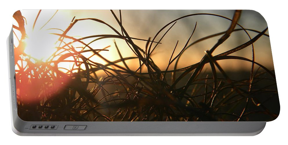 Grass Portable Battery Charger featuring the photograph Sunset Grass 2 by Nathanael Smith