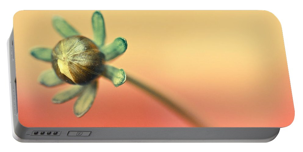 Flower Portable Battery Charger featuring the photograph Sunshine Flower by Shane Holsclaw