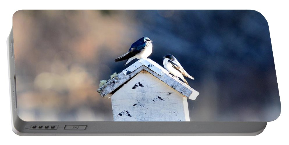 Tree Swallow Portable Battery Charger featuring the photograph Sunworship by Thomas Phillips