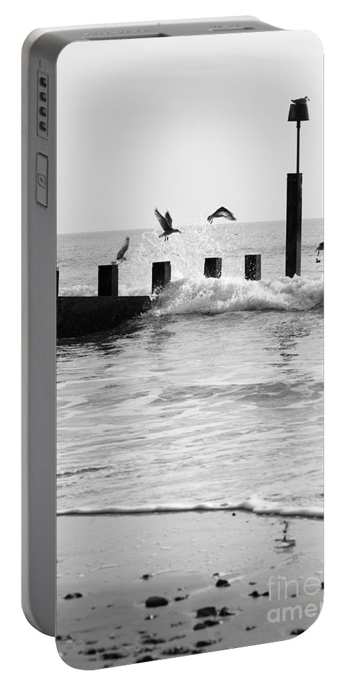 Autumn Portable Battery Charger featuring the photograph Surprised Seagulls by Anne Gilbert