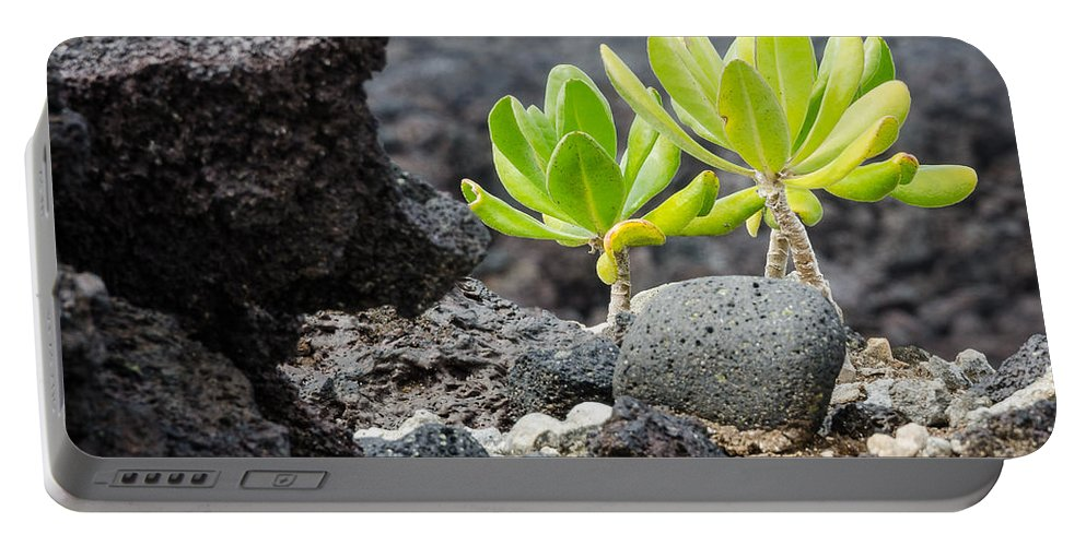 Lava Portable Battery Charger featuring the photograph Survivors by Georgette Grossman