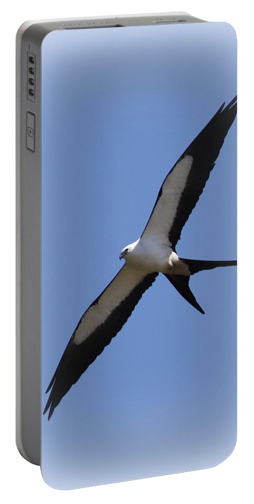 Swallow-tailed Kite Portable Battery Charger featuring the photograph Swallow-tailed Kite by Travis Truelove