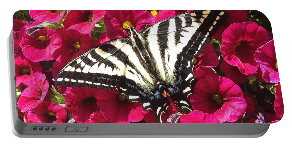 Swallowtail Butterfly Portable Battery Charger featuring the photograph Swallowtail Butterfly Full Span On Fuchsia Flowers by Deprise Brescia
