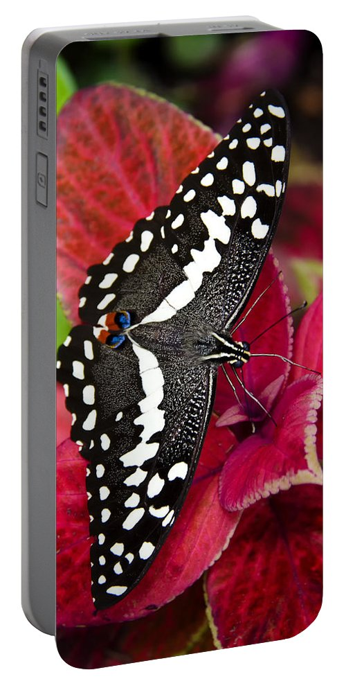 Black And White Butterfly Portable Battery Charger featuring the photograph Swallowtail Butterfly by Saija Lehtonen