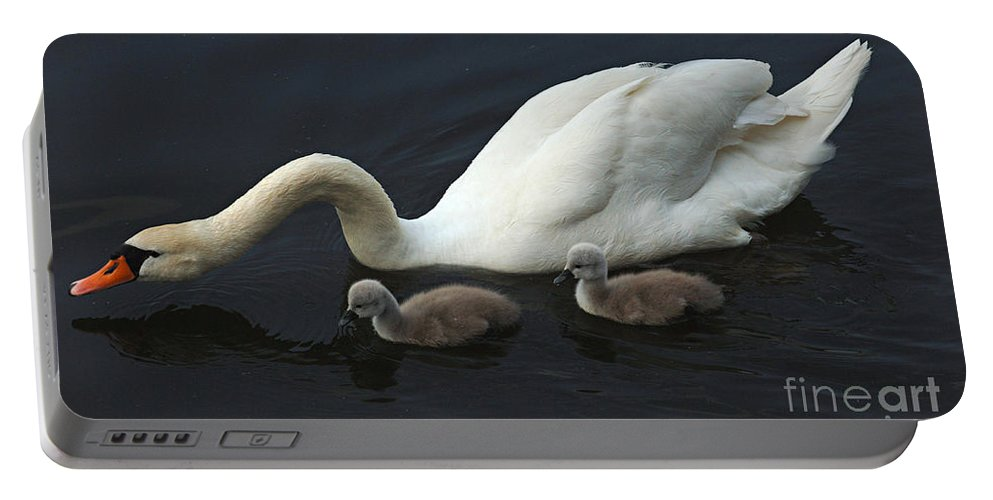 Swan Portable Battery Charger featuring the photograph Swan And Signets by Bob Christopher