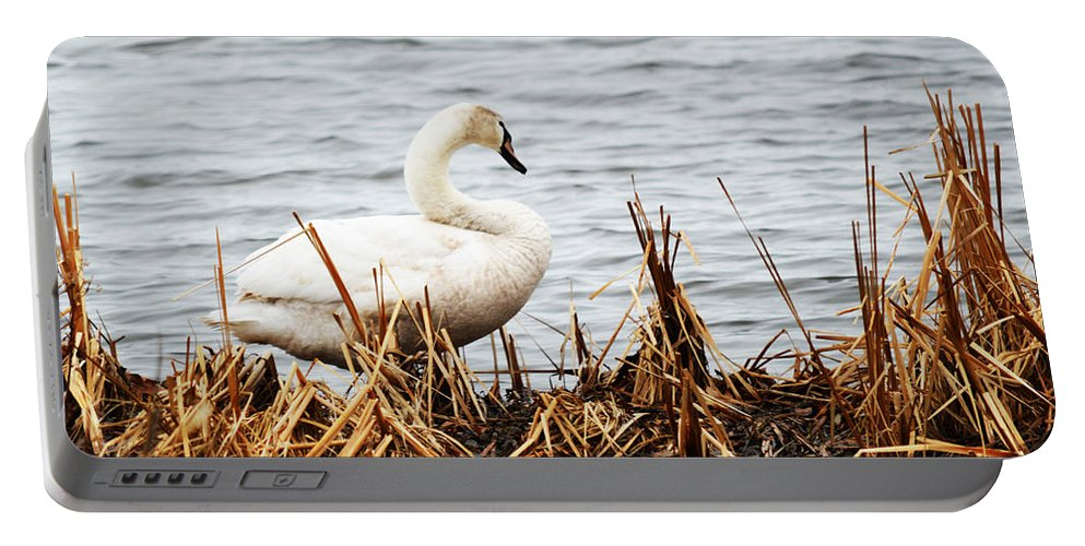 Swan Portable Battery Charger featuring the photograph Swan On Shore by Linda Kerkau