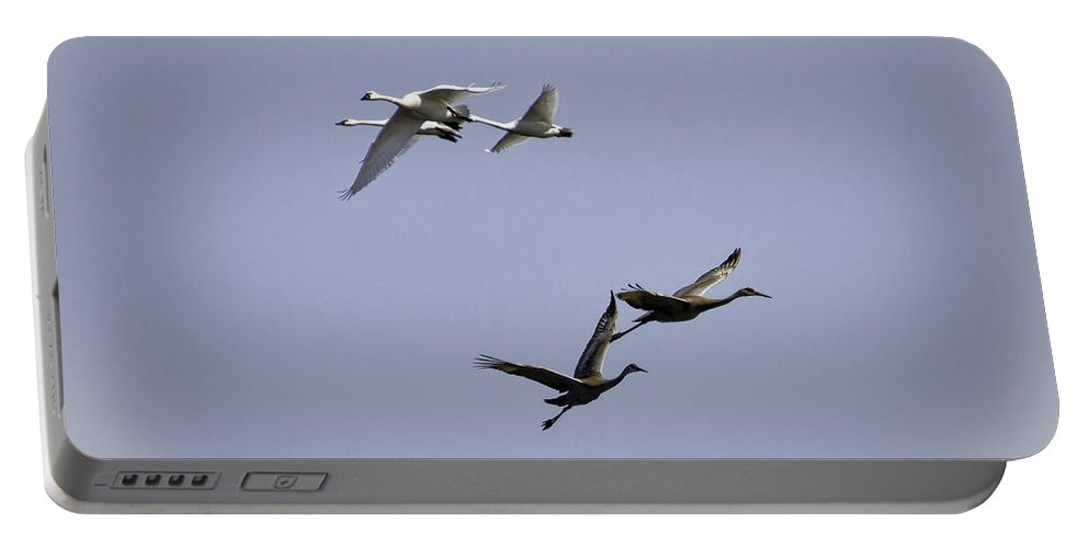 Tundra Swans Portable Battery Charger featuring the photograph Swans And Sandhills by Thomas Young