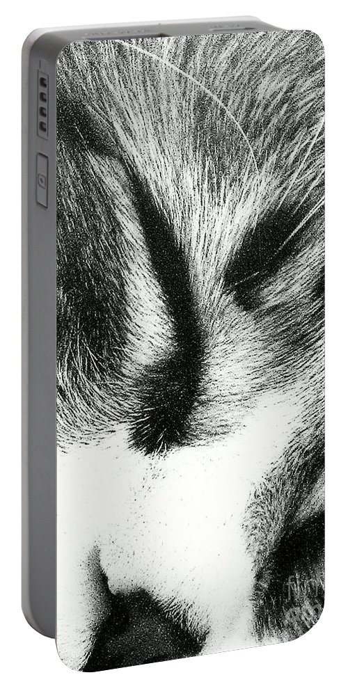 Maine Coon Portable Battery Charger featuring the photograph Sweet Dreams by Jacqueline McReynolds