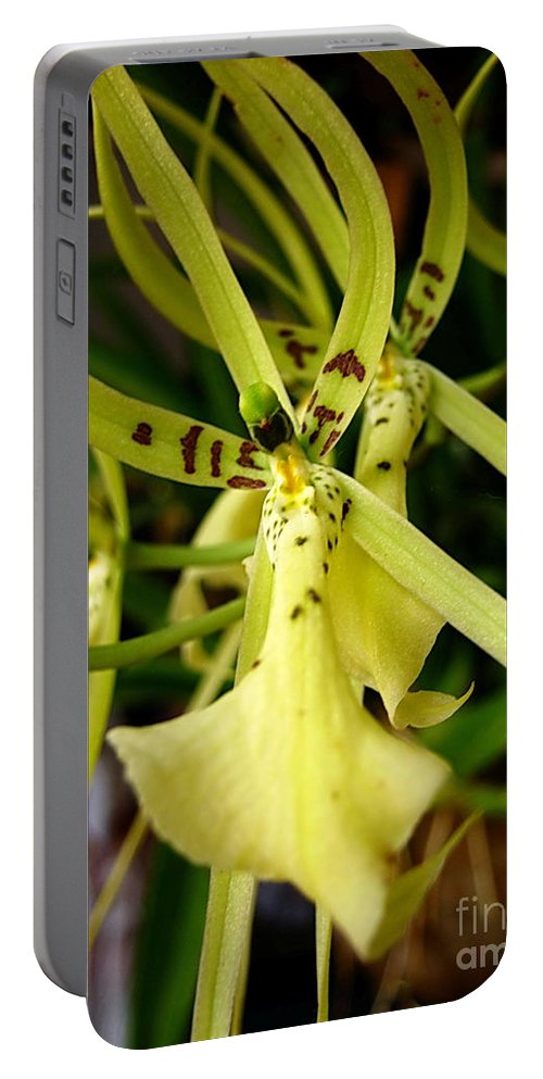 Nature Portable Battery Charger featuring the photograph Sweet Yellow by Michelle Meenawong