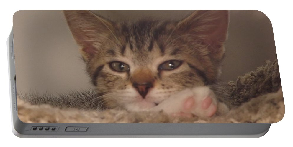 Kittens Portable Battery Charger featuring the photograph Symphony Keeping Watch by Jussta Jussta