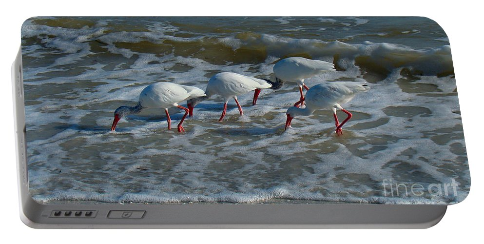 Ibis Portable Battery Charger featuring the photograph Synchronized Beach Combing by Nancy L Marshall