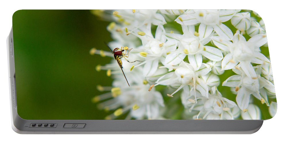 Allium Portable Battery Charger featuring the photograph Syrphid Feeding On Alliium Blossom by Douglas Barnett