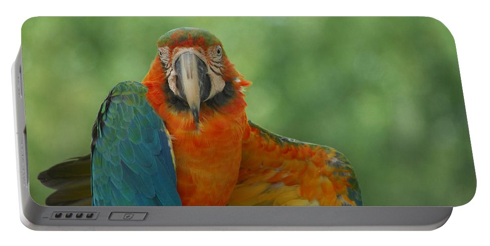 Parrot Portable Battery Charger featuring the photograph Ta Da by Donna Blackhall