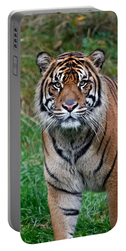 Tiger Portable Battery Charger featuring the photograph Tall And Fierce by Athena Mckinzie