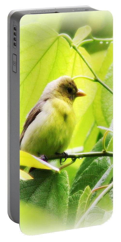Tanager Portable Battery Charger featuring the photograph Tanager by Travis Truelove
