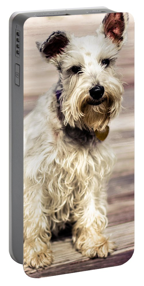Lakeland Terrier Portable Battery Charger featuring the photograph Terrier On Deck by Jon Cody