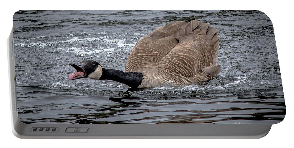 Territorial Portable Battery Charger featuring the photograph Territorial Canadian Goose by Cheryl Baxter