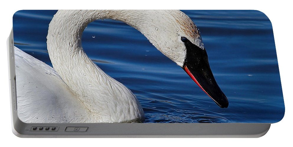 Swan Portable Battery Charger featuring the photograph Testing The Waters by John Absher