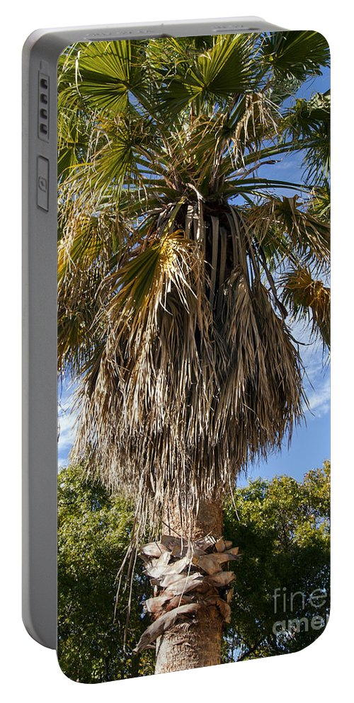San Antonio Texas River Walk Palm Tree Trees Riverwalk Portable Battery Charger featuring the photograph Texas Palm by Bob Phillips