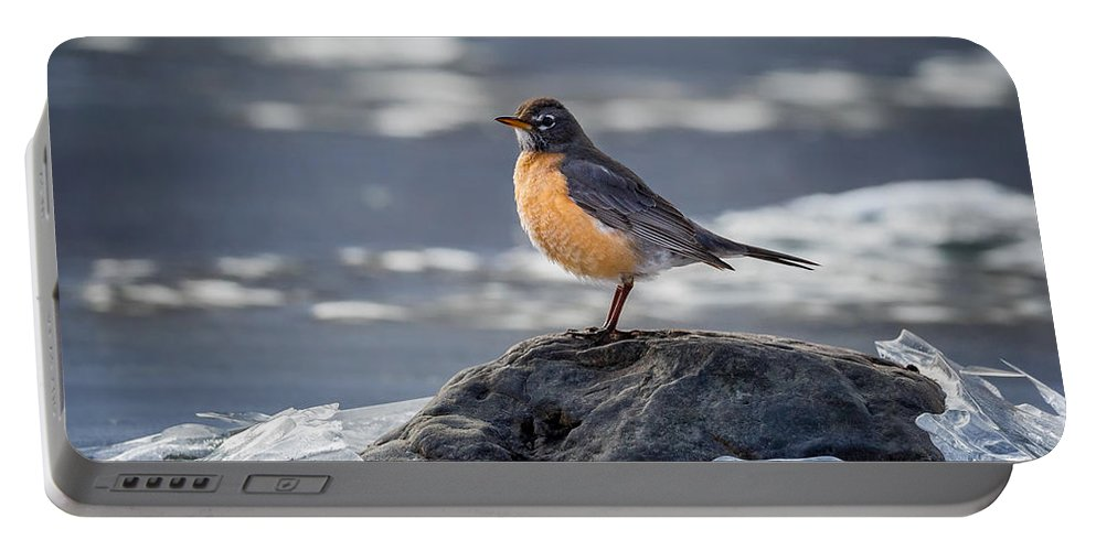 Robin Portable Battery Charger featuring the photograph The American Robin by Bill Wakeley