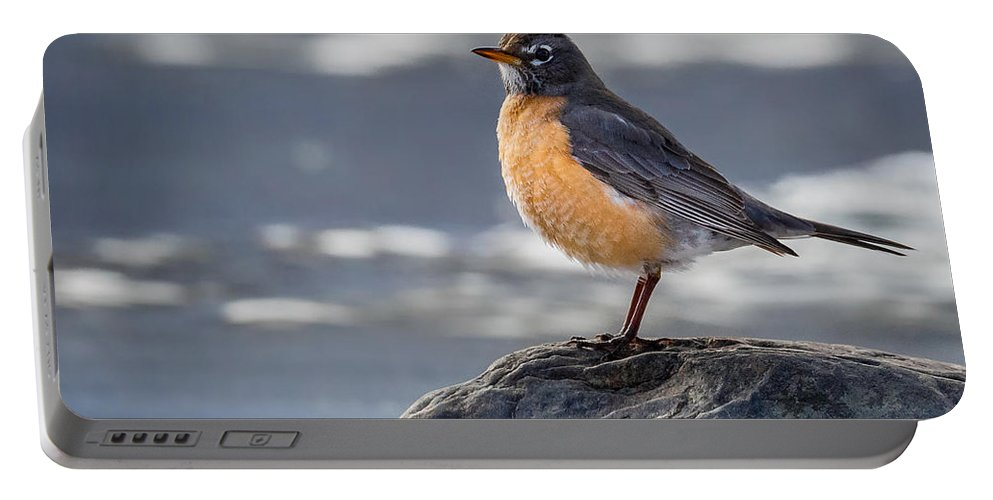 Robin Portable Battery Charger featuring the photograph The American Robin Square by Bill Wakeley