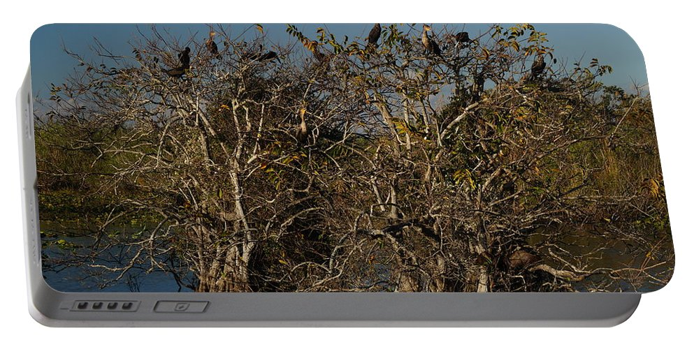 Everglades Portable Battery Charger featuring the photograph The Anhinga Trees by John Wall