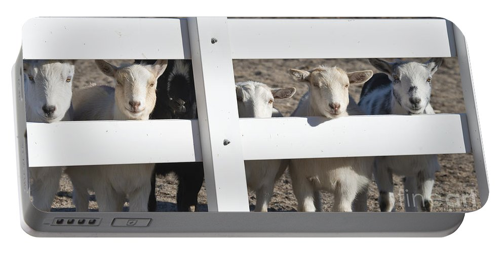 Goats Portable Battery Charger featuring the photograph The Audience by Dianne Phelps