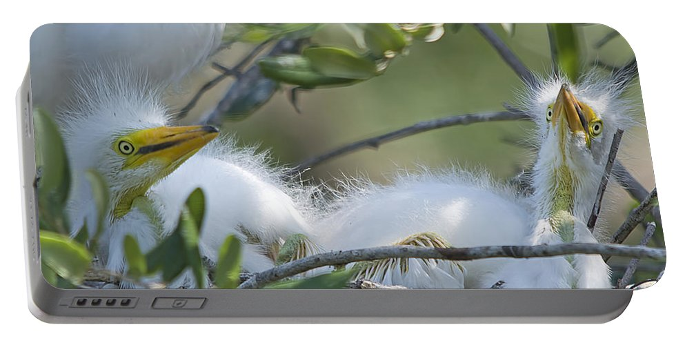 Wildlife Portable Battery Charger featuring the photograph The Babies by Kenneth Albin